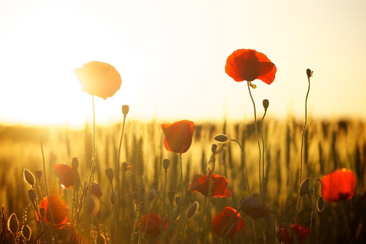 """""""Não somos apenas o que pensamos ser. Somos mais; somos também o que lembramos e aquilo de que nos esquecemos; Somos as palavras que trocamos, os enganos que cometemos, os impulsos a que cedemos, sem querer."""" Sigmund Freud."""